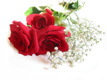 Rose bouquet on white Royalty Free Stock Photos