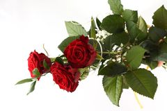 Rose bouquet on white background. Stock Photos