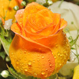 Rose of a bouquet. Rose yellow orange of a bouquet Stock Images