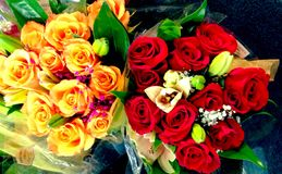 Rose Bouquets Royaltyfria Bilder
