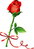 Rose with bow. Red rose on isolated white