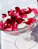 Rose bowl Royalty Free Stock Photo