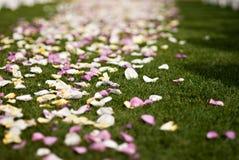 rose bröllop för färgrika petals Arkivbild