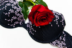 Rose and bra Stock Image