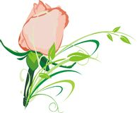 Rose and branch. Pink rose and branch. Vector Stock Images