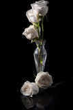Rose& branco x27; s Imagens de Stock
