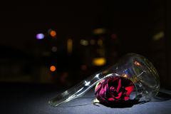 Rose Broken Glass Night Bokeh rossa immagine stock