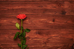Rose on brown background with empty copyspace Stock Photo