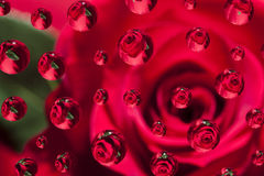 Rose Bubbles Abstract Stock Images
