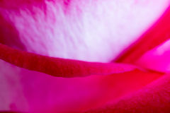 Rose Bud Abstract Background Photo libre de droits