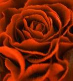 Rose bud.digital painting Royalty Free Stock Photo
