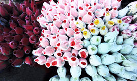 Rose bud flower shop Stock Images
