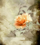 Rose bud - retro style Royalty Free Stock Photography