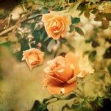 Rose bud - retro style Royalty Free Stock Photos