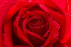 Rose Bud roja romántica foto de archivo libre de regalías