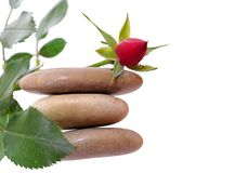 Rose bud and stone isolated Stock Photos