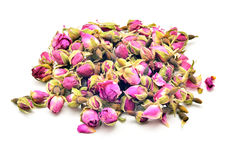 Rose buds Royalty Free Stock Image