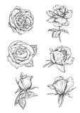 Rose buds icons. Flower sketch emblems. Roses buds icons. Vector pencil sketch flowers with leaves on stem. Graphic emblems for tattoo, decoration stock illustration