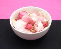 Rose buds and petals Stock Photos