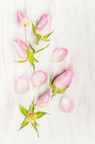 Rose buds and petals on  white wooden background Stock Photography