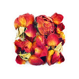 Rose buds in square composition Stock Image