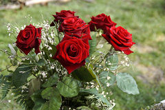 Rose bunch Stock Photography