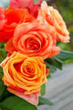 Rose bunch yellow orange red Stock Photography