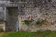 Rose bush and stoned wall. Roses on stoned wall  along with grilled garden gate Charente maritime, France Stock Photography