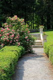Rose bushes and pebbled walkway in garden Stock Images
