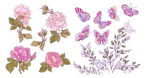 Rose, butterfly and branch set. Stock vector illustration. Stock Image