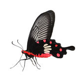 Rose Butterfly comune Fotografie Stock Libere da Diritti