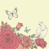 Rose and butterfly 5. Vintage flower background with bird. Beautiful invitation card with rose, pigeon and butterfly Stock Image
