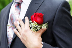Rose in a buttonhole of the groom Stock Photo