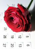 Rose on calendar. A red rose on a calendar. Gradient background Stock Image
