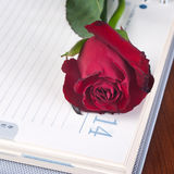Rose on a calendar Stock Photography