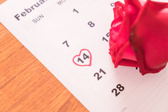 Rose on the calendar with the date of February 14 Valentine's da Stock Photo
