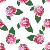 Rose camelia hand drawn pattern on white Stock Image