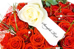 Rose and card Stock Image