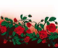 Rose card. Stock Images