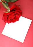 Rose with card. Stock Image