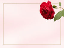 Rose Card. Card with rose and border for an invitation or notecard Stock Photography