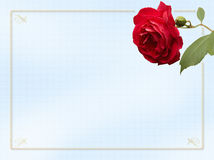 Rose Card. Card with rose and border for an invitation or note card Stock Photo