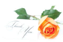 Rose and a card with the words thank you Royalty Free Stock Photo