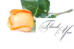 Rose and a card with the words thank you Stock Photo