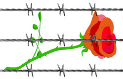 Rose. A cartoon rose set on a white background with barbed wire Stock Photos