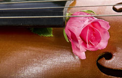 Rose on cello Stock Photo