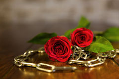 Rose and chains background. Closeup from chains and a red rose Stock Photo