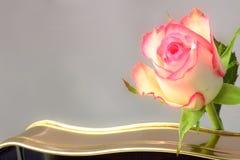 Rose and chocolates Royalty Free Stock Photo