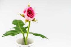 Rose-clair s'est levé sur le vase avec la feuille sur le fond blanc Image libre de droits