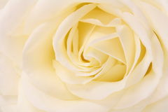 Rose close up Royalty Free Stock Photos